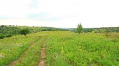 Estrada de campo em um campo verde de perene gramíneas borda — Vídeo stock