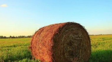 Bale of hay in the field — Stock Video