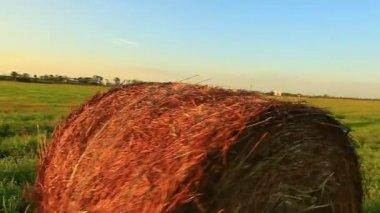 干し草のフィールド — ストックビデオ