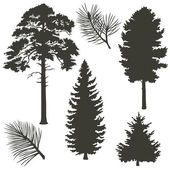 Coniferous trees silhouettes — Stock Vector