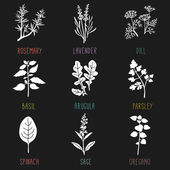 Fresh herbs and spices — Stock Vector