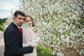 Wedding couple at spring flowering and blossom cherries tree — Stock Photo
