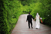 Wedding couple at the green alley — Stock Photo