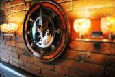 Weddin couple on a circle mirror — Stock Photo
