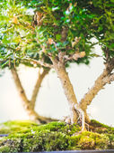 Malé stromy — Stock fotografie