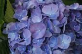 Coloratissimi fiori che sbocciano — Foto Stock