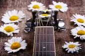 Guitar and daisy flowers — Stock Photo