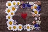 Frame daisy background wallpaper design — Stock Photo