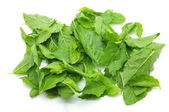 Heap of green fresh basil leaves — Stock Photo