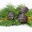 Cedar cones on a branch — Stock Photo #74404731