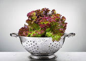 Lettuce in a colander — Stock Photo