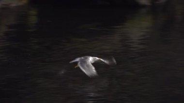 Seagull flying under ocean — Stock Video
