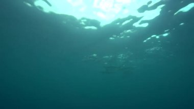 Group of spinner dolphins — Stock Video