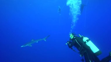 Shark with scuba divers — Stock Video