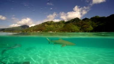 Sharks and rays in shallow water — Stock Video