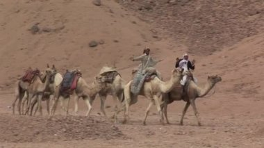 Bedouins walking in the desert — Stock Video