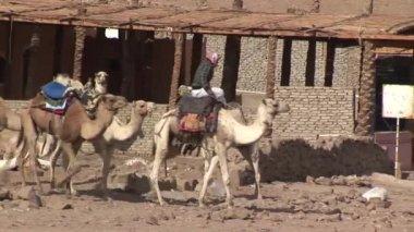 Bedouin walking in the desert — Stock Video
