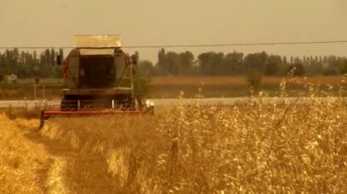 Combine on the wheat field — Stock Video