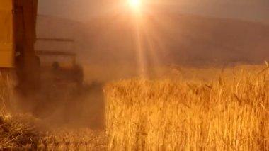 麦畑のコンバイン — ストックビデオ