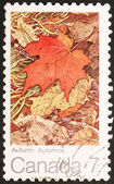 Maple leaf in fall — Stock Photo