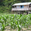 Постер, плакат: Small farm on river island of Amazon