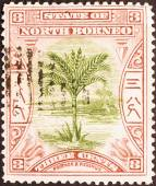 Sago palm on North Borneo stamp — Foto Stock