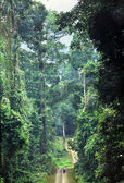 Ground road in rainforest of Borneo — Zdjęcie stockowe