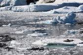 Buz üzerinde leopar foku — Stok fotoğraf