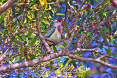 Colorful bird sitting on branch — Photo