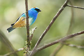 Colorful bird sitting on branch — Stockfoto