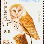 Barn owl on austrian postage stamp — Stock Photo #79756928