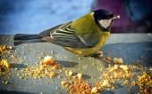 Little bird — Stock Photo