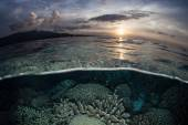 Coral Reef and Sunset — Stock Photo