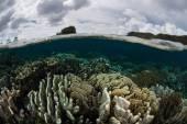 Кораллы под поверхностью моря — Стоковое фото