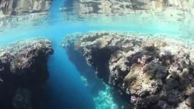 Shallow coral reef — Stock Video