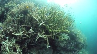 Mängd olika hårt, reef-byggnaden koraller — Stockvideo