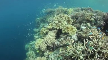 Healthy corals thrive in Raja Ampat — Stock Video