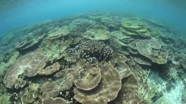 Healthy and diverse coral reef — Stockvideo