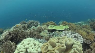 Diversity of fish and marine invertebrates in coral reef — Stock Video