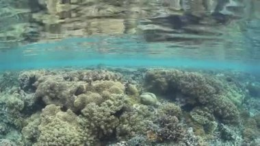 Diverse coral reef grows in the shallows of Raja Ampat — Stock Video