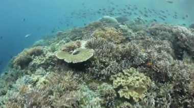 Diversity of fish and marine invertebrates in coral reef — Wideo stockowe