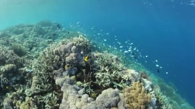 Colorful reef fish swim above a coral reef slope — Stock Video
