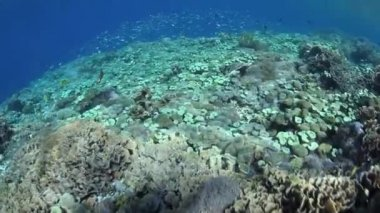 Healthy and diverse coral reef — Stock Video