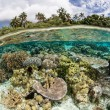 Diverse coral reef grows in shallow water — Stock Photo #73037063