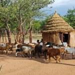 Himba village with traditional huts near Etosha National Park in Namibia, Africa — Stock Photo #84555498