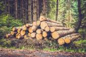 Pile of wood logs in the forest - retro and vintage style — Stock Photo