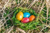 Nest with colored eggs — Stock Photo