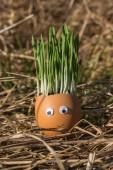 Happy one egg — Stock Photo