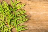 Thuja leafes on old wood — Foto de Stock