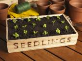 Seedling Tray — Stock Photo